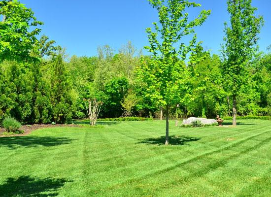 Lawn Care Services Fargo Moorhead Diamond Cut Lawn And