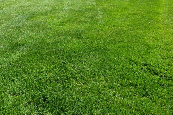 back yard lawn services fargo nd